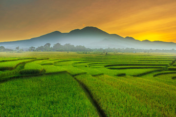 the beauty morning at rice fields, the sunligth is very cool and rainbow after rain is very beautyful in at fields kemumu north bengkulu indonesia