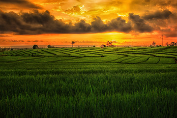 rice fields north bengkulu regency, amazing nature color and sky, beautyful morning sunrise and sunset in here, get visit now in here