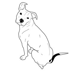 Pitbull/American Staffordshire Terrier Sitting, Dog Vector