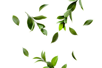 Spring background with young green plants and leaves on white background top view