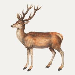 Deer in vintage style
