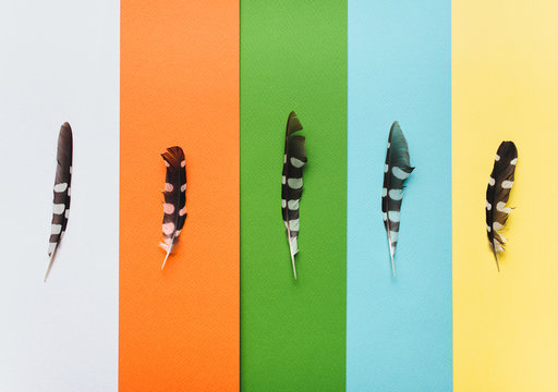 Cuckoo feathers on multicolor pastel paper as a symbol of poetry or prose. Writing and World poetry day. Competition for young talents. Multicolor stripes background.