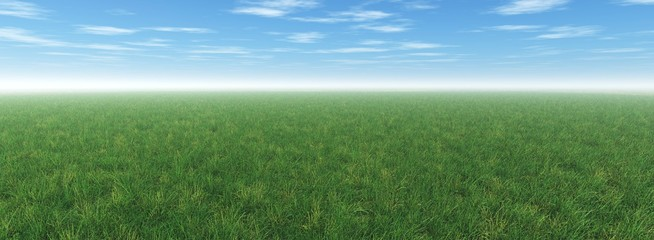 Green meadow under the blue sky, grass and sky, nuci over the field, a lot of green grass under the sky with clouds,