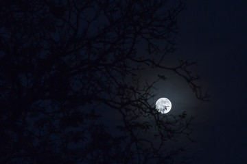 Moonrise full moon behind tree branches