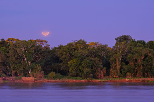 Rainforest with the Blood Moon right afrer lunar eclipse, Cuiaba River, Porto Jofre, Pantanal, Mato Grosso do Sul, Brazil