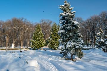 Winter landscape in the Roman Park, Neamt, Romania