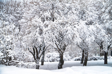 Snowy winter park in Russia, tree wth branches. Cold weather