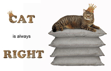 The king in a crown is lying on the stack of pillows. Cat is always right. White background.