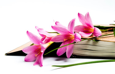 Pink lily flowers on an open book