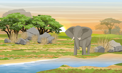 African elephant at a watering place. Savannah, river, large stones, mountains and an acacia tree. Wild animals of Africa. Realistic Vector Landscape