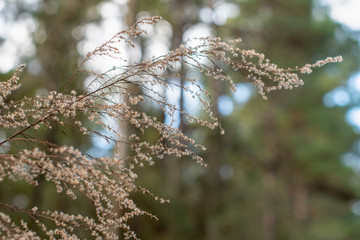 Soft focus branch of a wintered perennial with forest background ~WINTERED~ Wall mural