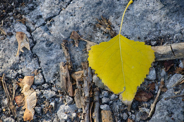 yellow autumn leaf on the road