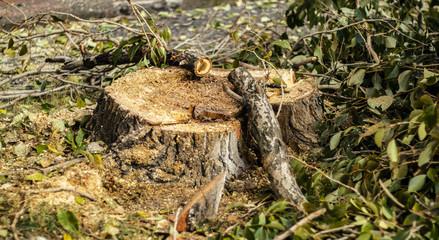 photo of the tree