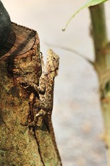 Chameleon on a tree with the nature