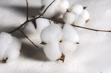Cotton flowers on light background