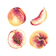set of peaches fruits isolated on white background. Whole fruits and slices