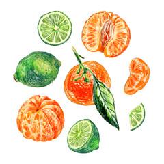 set of citrus isolated on white background. Whole fruits and slices