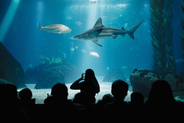 Kids During Underwater Life Class in Oceanarium. Children Watching Fish. Teacher Showing Sharks, Rays, Sunfish, Mantas