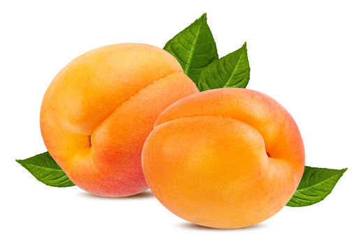 Fresh apricots with leaves isolated on white background with clipping path