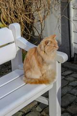 Orange Cat sitting on a bench, Stavanger, Norway