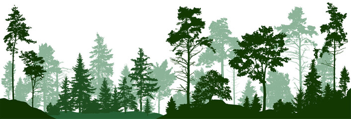 Forest silhouette trees. Evergreen coniferous forest with pines, fir trees,  christmas tree, cedar, Scotch fir. Vector illustration. (Every tree isolated, separate from each other, free-standing)