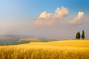 Italian summer countryside landscape – golden fields and blue sky