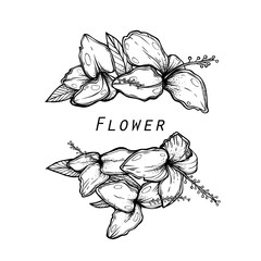 Bunch of Orchids flowers isolated from  background. Graphic nature drawing. Good print or cover. Beautiful floral element.