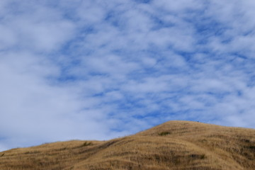 The dry grass on the hill top touches the blue sky with thin clouds above Gisborne, New Zealand.