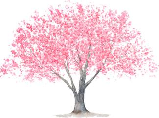 桜の木 水彩イラスト