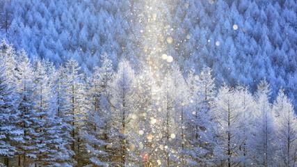 霧ヶ峰の霧氷とダイヤモンドダストとサンピラー