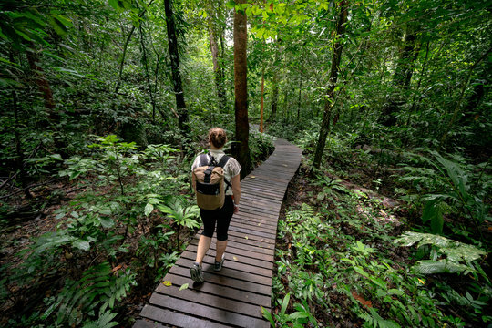 Young Caucasian Backpacker, Hiking Through Rainforest on Wooden Walkway in Mulu National Park, Borneo Malaysia