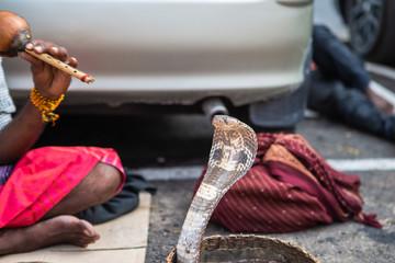 Snake charmer on streets of Colombo, Sri Lanka.