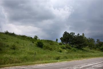 Pine tree near the road.