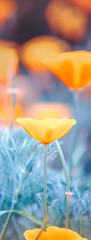 Sunny spring or summer pale blue landscape with orange flowers, blurred image selective focus