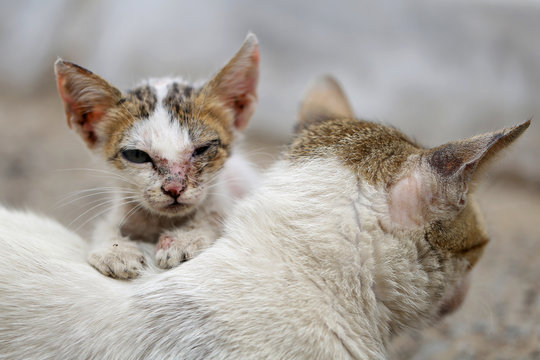 Vagrant sick cats. Homeless wild cats on dirty street in Asia