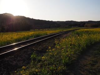 沈みゆく夕日と菜の花畑
