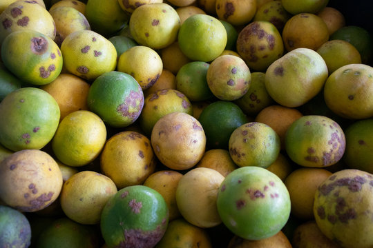 lime fungal plant diseases post harvest agriculture product