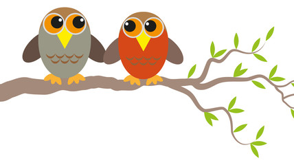 two owls in love on a branch