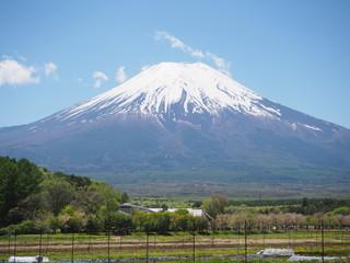 立派に佇む富士山