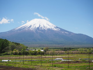 富士山と田畑