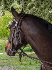 Cardrona New Zealand Horse