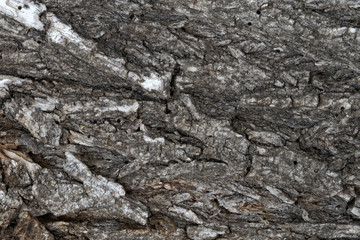 old tree bark, elm, background
