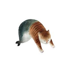 Cat mermaid
