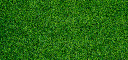Foto auf AluDibond Gras grass field background, green grass, green background