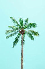 One of tall palm tree green leaves and blue sky background