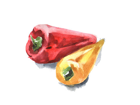 Set of red and yellow peppers. Watercolor illustration with black ink outline.