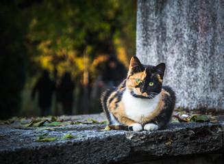 Beautiful stray cat on rocks, cute pet, autumn season