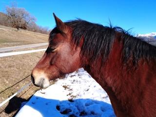 Profil decheval brun/ brown horse profile pic