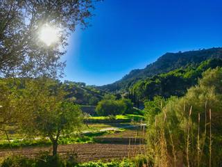 green landscape in the golden hour