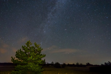night prairie landscape, starry sky with milky way above the pine tree